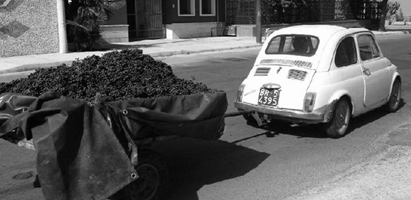 Valentino Schiotti spotted the little Fiat and its trailer filled with small grapes and knew he had to have them
